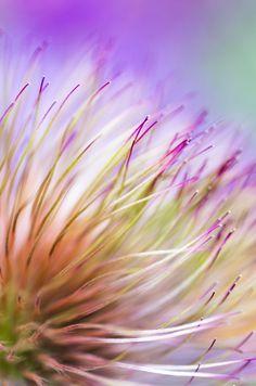 Abstract Macro Image Of Flower Wins POTW Accolade #photography #photo https://www.ephotozine.com/article/abstract-macro-image-of-flower-wins-potw-accolade-28862