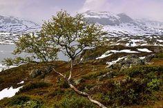 Nature in Haukeligrend, Norway - a photo by Torbjorn Milje