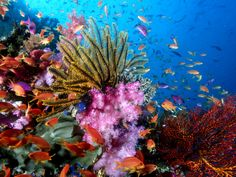Coral Reef Fish | Crinoids, Soft Corals and Reef Fish on Coral Reef - hqworld.net - high ...