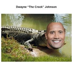 Funny Laugh, Stupid Funny, Haha Funny, Funny Jokes, Really Funny Pictures, Funny Pictures Can't Stop Laughing, Super Funny Memes, Stupid Memes, The Rock Dwayne Johnson