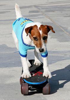 When not penning novels, Uggie enjoys skateboarding.
