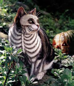 Looks like the Cheshire Cat