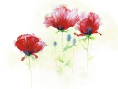 Red Poppies II Andrea Fontana Fine Art Print Poster