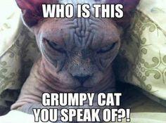 GRUMPY CAT WHO?