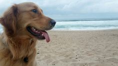 Beach Bum Ben 🐕🐳🐾