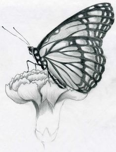 pencil drawings easy sketches butterfly flower drawing sketch wings pen draw shading flowers nature dibujos some mariposas butterflies dessin simple