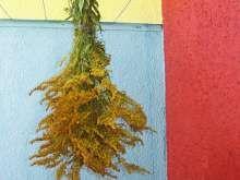 Celík zlatobýl, nať, září Herbs, Flowers, Plants, Herb, Plant, Royal Icing Flowers, Flower, Florals, Floral