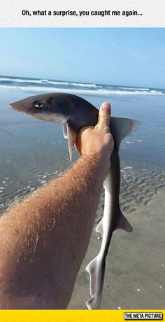 Disappointed shark is sarcastic...