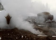 Steam Heat - Winter in Yellowstone - Pictures - CBS News
