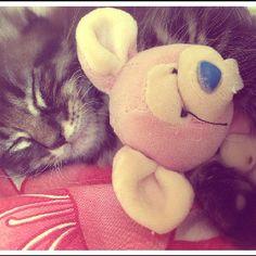 Happy furry cuty cute day !
