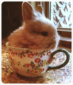 Is there anything cuter than a bunny in a cup? http://ift.tt/2ma3TH4