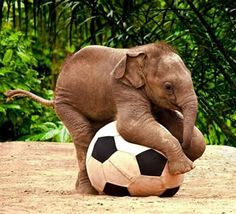 We love football♡  @どうぶつサッカー