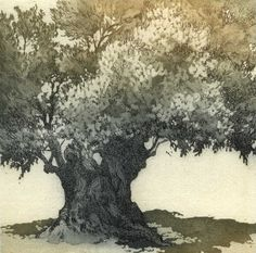 Old Olive-tree. / Vieil olivier. / Etching. / Gravure à l'eau forte. / By Chrissy Norman.