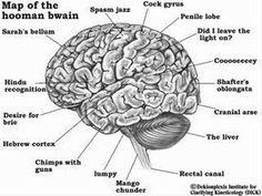 Human Brain Anatomy . Human Brain Anatomy Pin Amy Yee On