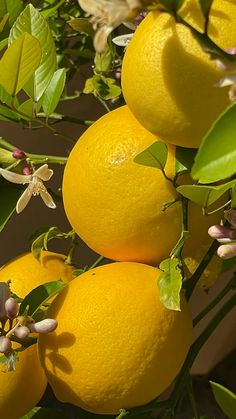 Colourful Photography, Yellow Photography, Fruit Photography, Aesthetic Room Decor, Aesthetic Colors, Strawberry Lemonade, Pink Lemonade, Lynchburg Lemonade, Lemon Pictures