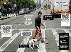 Dog walking website inspiration