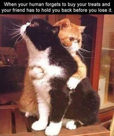 Make Your Caturday Even Better With These Funny Cat Memes - World's largest collection of cat memes and other animals Funny Animal Memes, Cute Funny Animals, Cute Baby Animals, Funny Cats, Funny Cat Quotes, Cat Memes Hilarious, Funniest Animals, Cute Kittens, Cats And Kittens