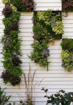 As placas de suculentas neste jardim formam desenhos na parede.