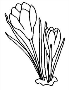 Flowers coloring page 104 Line Drawing, Drawing Sketches, Drawings, Spring Colors, Spring Flowers, Colouring Pages, Coloring Books, Hand Embroidery, Embroidery Designs