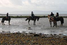 Riding Holiday, Horse Riding, Vacations, Camel, Ireland, January, Horses, Holidays, Group