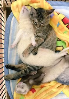 Rescued Kitten Thinks She's a Ferret - We Love Cats and Kittens