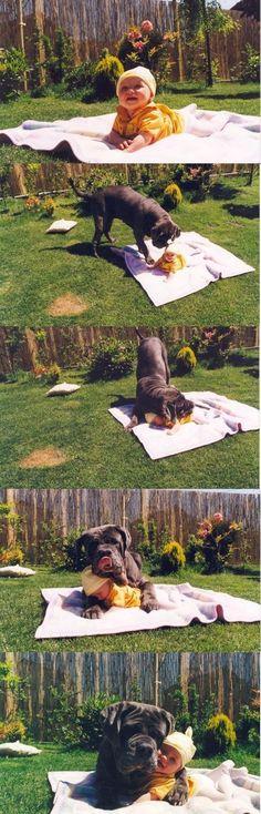 Perro y bebé .... sin palabras ....