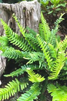 25 Types Of Ferns To Consider For Your Home [Listicles]