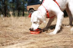 Best Dog Products for RVing