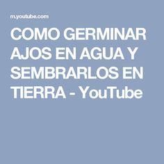 COMO GERMINAR AJOS EN AGUA Y SEMBRARLOS EN TIERRA - YouTube