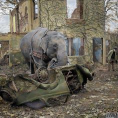 """Circus elephant """"Kiri"""" picking up the wreckage of a car before loading it onto a trailer during the clearance of a bombed out garage in Hamburg, Germany. November 1945 During the war the elephants at the Tierpark Hagenbeck Zoo in Hamburg had been..."""
