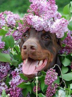 Flower lover