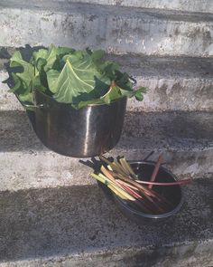 How to make a mordant (that helps dyes adhere to fiber) out of rhubarb leaves. Natural Dye Fabric, Natural Dyeing, Au Natural, How To Dye Fabric, Dyeing Fabric, Textile Dyeing, Textile Art, Fabric Manipulation Techniques, Dog Steps