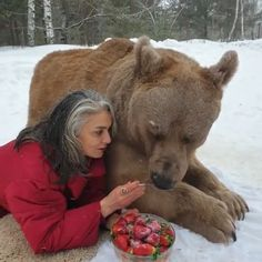 Bear loves to eat delicious strawberries ♥ ️ ♥ ️ - Tiere - Adorable Animals Cute Funny Animals, Cute Baby Animals, Animals And Pets, Beautiful Creatures, Animals Beautiful, Animal Memes, Mammals, Animal Pictures, Kittens