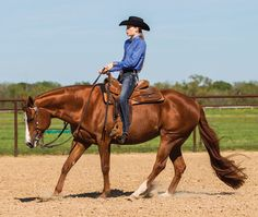 Work your halts with this exercise from Horse & Rider Magazine: http://horseandrider.com/article/stop-29834