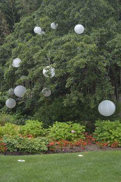 Lanterns in tree  Princeton