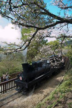 Alishan Train #Taiwan 阿里山火車