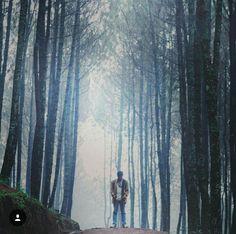 Pine forest M O K O