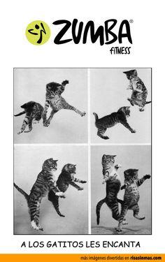 A los gatitos les encanta Zumba.