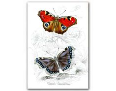 Amazing Butterflies, vintage illustration printed on Parchment paper. Buy 3 and get 1 FREE on Etsy, $11.90