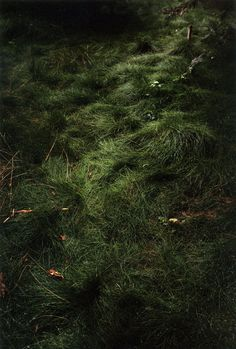 Jitka Hanzlová . grass path, forest series, 2003  We chose a forest because it is the better representation a place that involves all the senses at one time, you can hear the animals, see the light, across the leaves if the trees, smell the nature and sense the plants, you can even taste the environment