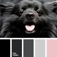 black, black color, color matching, color palettes for decor, color palettes for designers, colors for decor, dark grey, grey