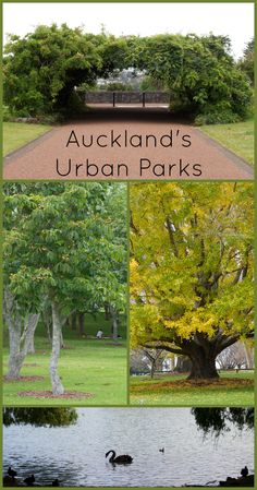 There are plenty of parks around New Zealand, and even in Auckland city the urban parks are clean and green. For more information visit Albom Adventures