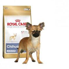 Alimento Especifico Para Bulldog Frances Adulto French Bulldog 26