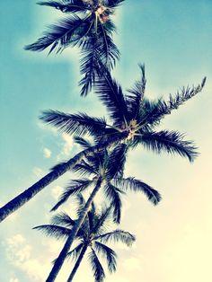 Poolside Palm Trees   #Maui #Hawaii