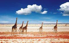 Highlights of Namibia, Botswana & Zimbabwe : See the abundance of wildlife found in Western Africa in this 20 day safari to Namibia, Botswana and Zimbabwe. Delta De L'okavango, Monte Everest, Parc National, Landscape Wallpaper, Animal Wallpaper, Mac Wallpaper, Sunset Wallpaper, African Safari, East Africa