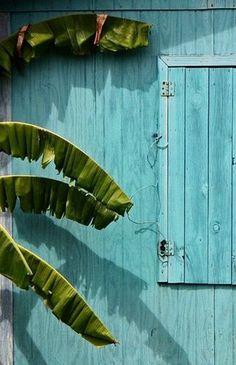 Palmier et façade bleue