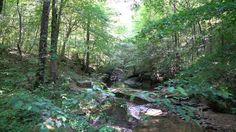 Deep in the Wilderness with Zeiss Batis 25mm