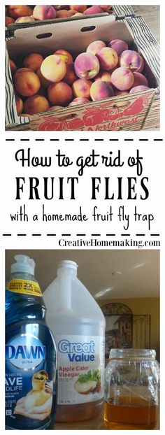 How to get rid of fruit flies and gnats in the house FAST with a simple homemade fruit fly trap. It really works! Tips for controlling and getting rid of fruit flies in your home with a homemade fruit fly trap. Homemade Fruit Fly Trap, Diy Fruit Fly Trap, Recipe For Fruit Fly Trap, Fruit Fly Traps, Fruit Fly Spray, Fruit Fly Killer, Homemade Gnat Trap, Diy Gnat Trap, House Cleaning Tips