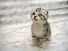 Google Image Result for http://www.pictures-of-kittens-and-cats.com/images/cute-kitten-pictures-002.jpg