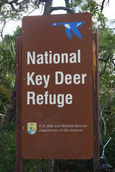 Big Pine Key.  The deer are the tiniest deer I have ever seen and are an endangered species.  $10,000 fine if you hit one!!  The speed limit is like 10 mph through here...one night I saw why!!!  They were so cute!!!  Luckily I was paying attention!